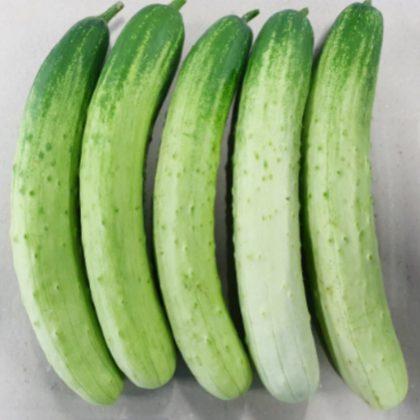 【韓国産】胡瓜.きゅうり 2個